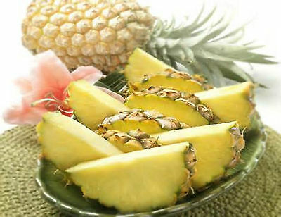 Pineapple Paradise Fragrance Oil Candle/Soap Making Supplies ***Free Shipping***](Paradise Supply)
