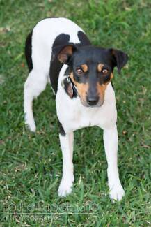 Sophie - small female Fox Terrier Mix Sydney City Inner Sydney Preview