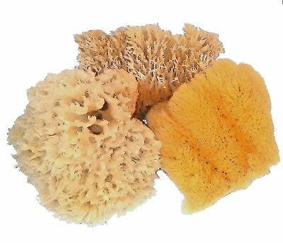 3 Natural Sea Sponge Cuts   Gulf Of Mexico Florida  Approx  3    4
