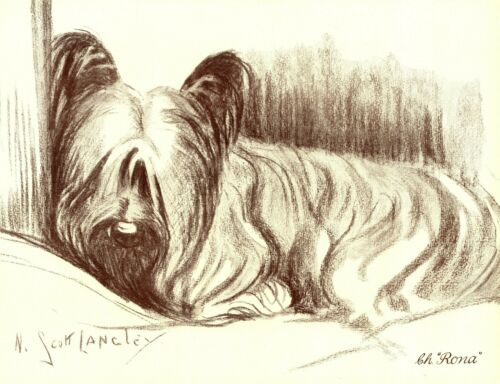 1930s Antique Skye Terrier Art Print Champion Rona Nina Scott Langley Art 3626-K