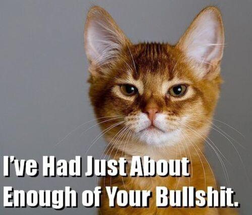 Funny Cat Humor  Refrigerator / Tool Box / File Cabinet Magnet