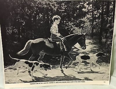 VINTAGE PRINT MEAD'S SON WITH POINTER DOG PONY HORSE GEORGE FORD MORRIS 1952