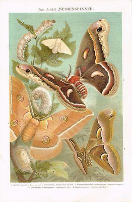 Farbtafel SEIDENSPINNER / MAULBEERSPINNER 1889 Original-Lithographie