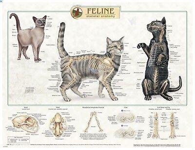 Feline Skeletal Anatomy Wall Chart #92530 Cat * ()