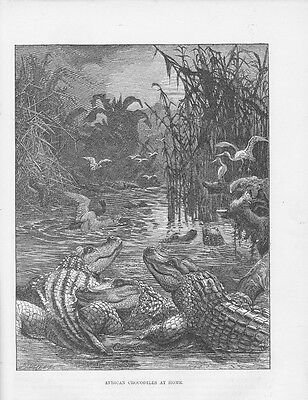 Krokodile Gangesgavial Gavialis gangeticus HOLZSTICH von 1863 CROCODILE Gharial