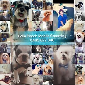 Bella Pooch Mobile Dog Grooming Oxenford Gold Coast North Preview