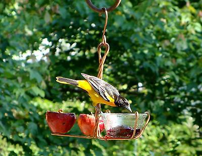 Songbird Essentials Fruit and Jelly Feeder Oriole Bird Feeder SEHHFRJL