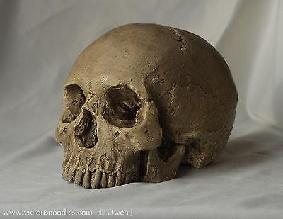 HUMAN SKULL REPLICA (polished bone) full size realistic, plaster of Paris