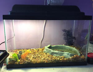 Two Fire Bellied Toads + 10 Gallon Tank and Cricket Container