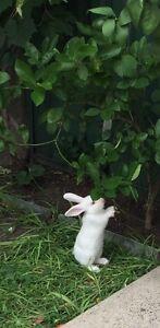Rabbit Mount Lewis Bankstown Area Preview