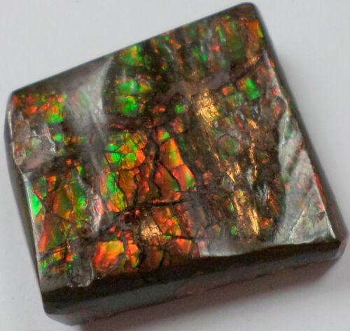 23.75 Cts Canadian Ammolite Ammonite Gemstone RED Green Cabochon Cab 20x19mm