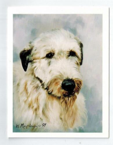 New Irish Wolfhound Note Card Set - 12 Notecards By Ruth Maystead IWO-2