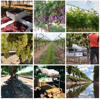 Vineyard Recruitment Robinvale Murray-Darling Area Preview