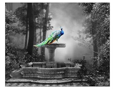 Blue Green Yellow Gray Home Decor Peacock Art Photo Print Bird Bedroom Picture