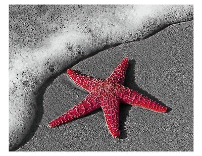 Red & Gray Starfish Beach Photo Art Print Wall Art Home Decor Matted Picture - Starfish Wall Art
