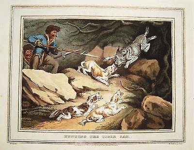 Luchs Luchsjagd  sehr  seltener  altkolorierter Kupferstich in Aquatinta 1813