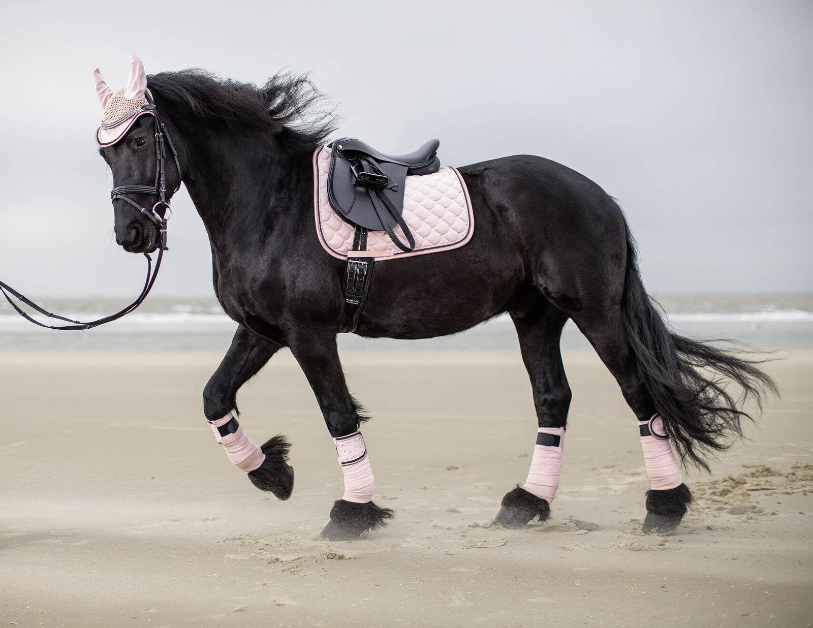 Fine Equine