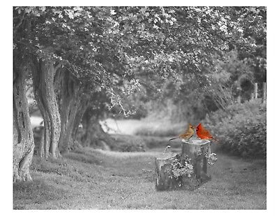 Red Gray Cardinals Home Decor B/W Art Photo Print Bedroom Bathroom Bird Picture