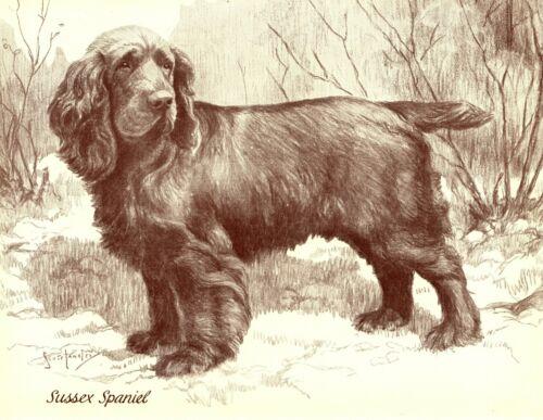 1930s Antique Sussex Spaniel Dog Art Print Nina Scott Langley Dog Art 3509-A