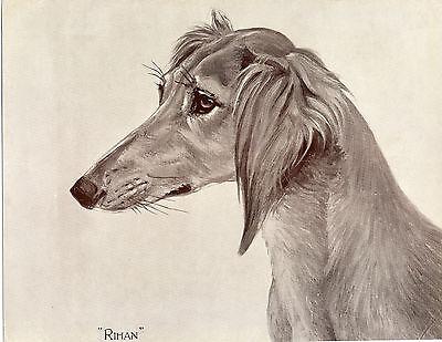 SALUKI NAMED DOG LOVELY SEPIA HEAD STUDY OLD ORIGINAL DOG ART PRINT FROM 1935