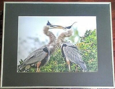 Bird Wildlife Photography - Great Blue Heron Marsh- Lou Newman Art Print