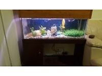 tropical fish with fish tank and accessories