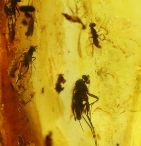 Baltic Amber with 8 Insects | Fossil Inclusions in Genuine Certified Amber