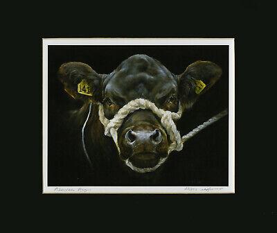 Aberdeen Angus show heifer print