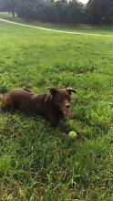 Dog walker for your pooch! Fitzroy North Yarra Area Preview