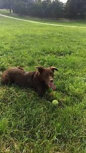 Dog walking for your pooch! Preston Darebin Area Preview
