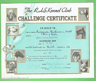 #T41. #15. 1958  RAS KENNEL CLUB DOG CHALLENGE CERTIFICATE, CHIHUAHUA