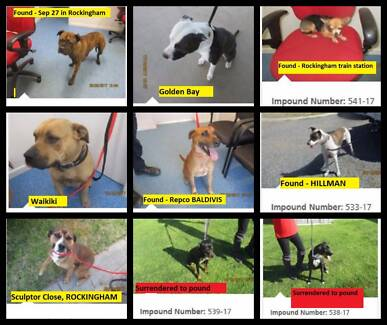 Wanted: FOUND Pets - ROCKINGHAM & surrounding areas