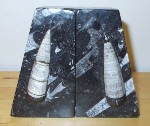 ORTHOCERAS BOOKENDS - PAIR Book Ends -Squid Fossils- FREE USA Shipping