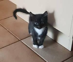 Gorgous kittens looking for a forever home