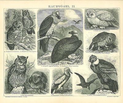 Condor Vogel (ORIGINAL-STICH von 1886: Raubvögel II. Geier Eule Uhu Condor Kauz ... (B13))
