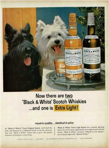 1964 BLACK & WHITE Scotch Whisky Scottish Terriers Vintage Print Ad