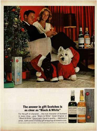 1964 BLACK & WHITE Scotch Whisky Scottish Terriers Christmas Vintage Print Ad