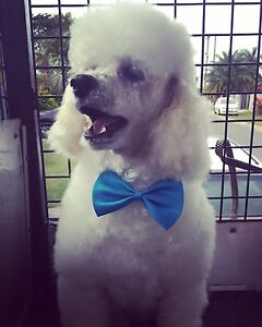 Bella Pooch Mobile Grooming Surfers Paradise Gold Coast City Preview