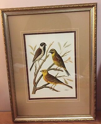 Yellow Breasted Domestic Bird Family W. Rutledge Framed & Matted Print 16 x 21""