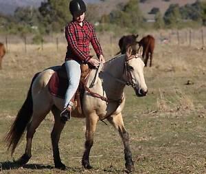 Super Buckskin Pony. **VIDEO**PRICE DROP Laidley Lockyer Valley Preview
