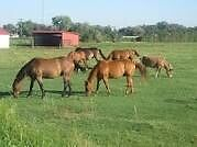 In search of stabling for 3-4 horses