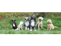 Dog Walking Bournemouth, Queens Park, Charminster area etc