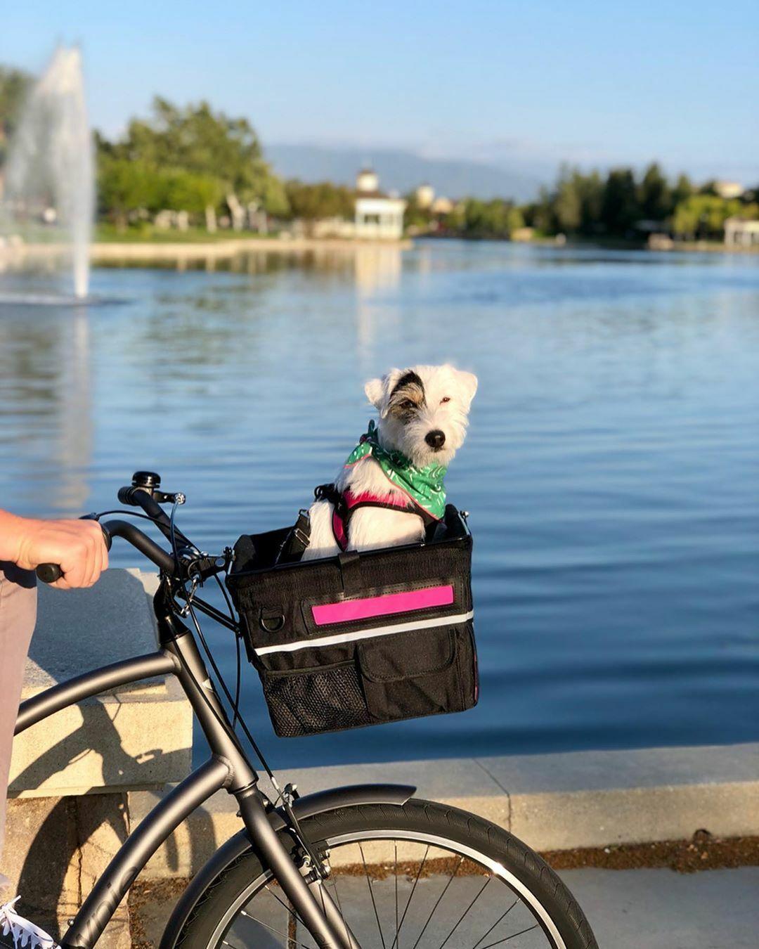 Travelin-K9 Pet Pilot MAX Bicycle Basket