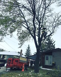 EMERGENCY TREE REMOVAL STORM AND WINTER FALLEN TREE