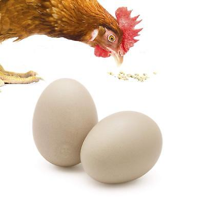 SunGrow 2 Ceramic Chicken Eggs:Encourages Egg Laying, Unique Home Decor, Natural