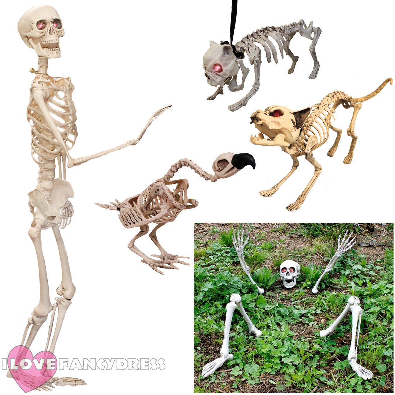 life size skeleton prop decoration halloween fancy dress party