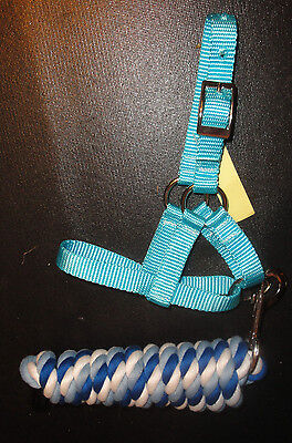 CRIA~Alpaca Baby ~ TURQUOISE Nylon HALTER with Coordinating COT LEAD ...USA made for sale  Shipping to India