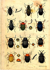 4 x 18th Century Natural History Print's of Insects