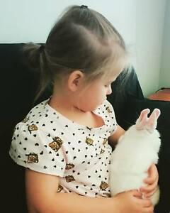 10 week old Netherland Dwarf bunny