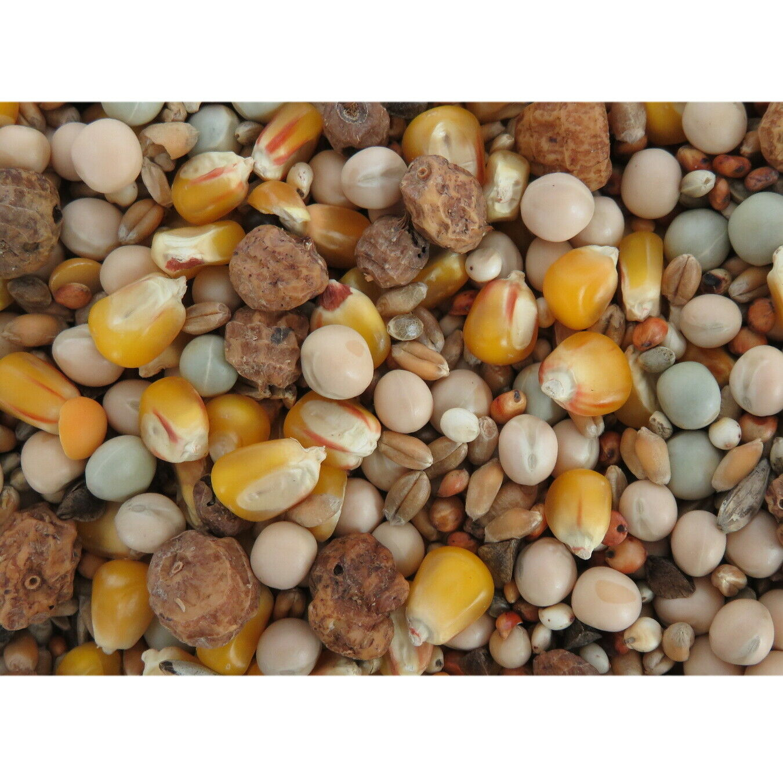 Partikelmix Extra Karpfen Partikel 1 kg Mais Tigernüsse Hanfsamen
